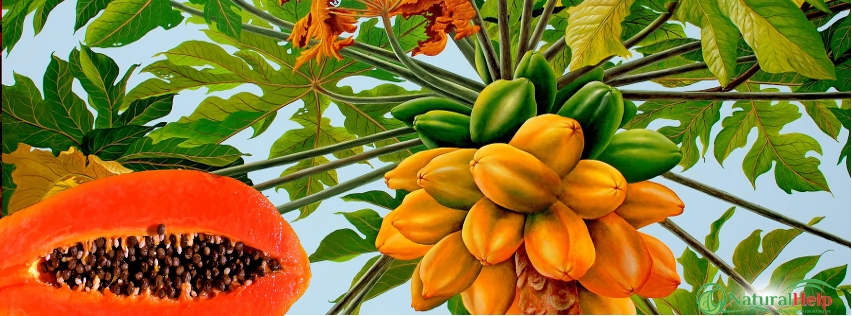 A papaya gyógyhatása: ha gyomorégésed van, ezt tudnod kell!