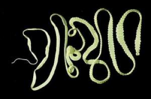 NaturalHelp parazita galandféreg